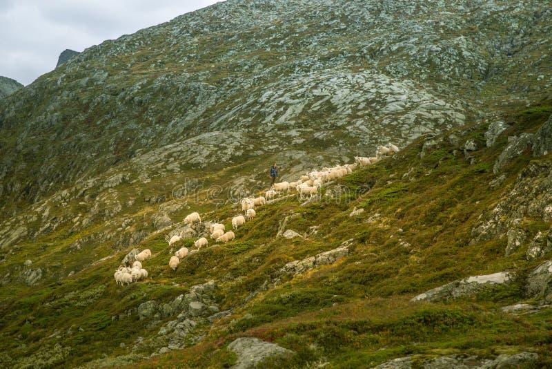 Eine schöne Herbstlandschaft in Nationalpark Folgefonna in Norwegen während einer Wanderung im windigen, regnerischen Wetter Berg stockfoto