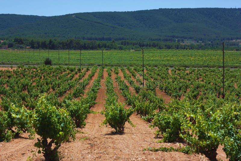 Eine schöne Landschaft von grünen Weinbergfeldern stockfotos