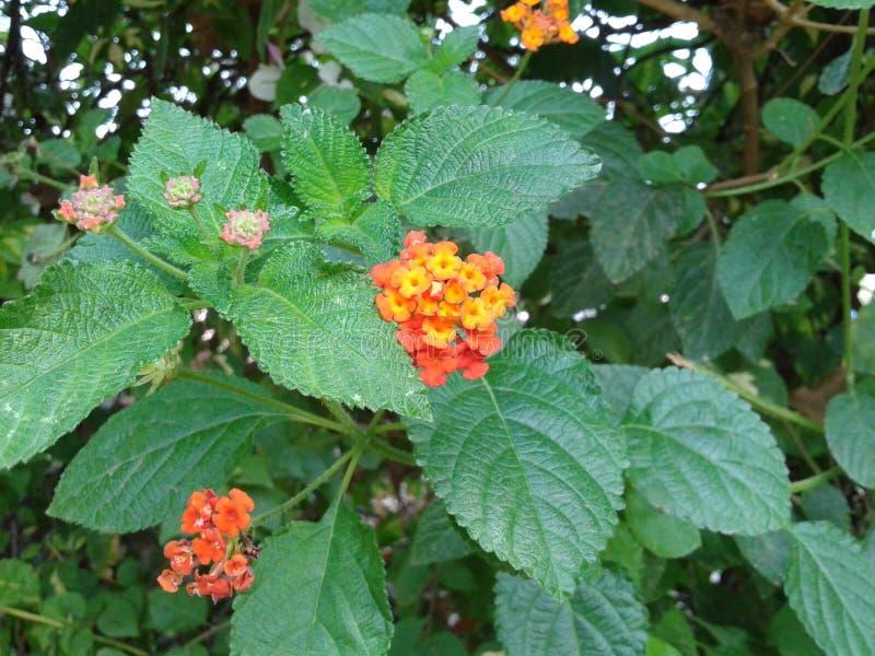 Eine schöne orange bunte Blume stockfotos