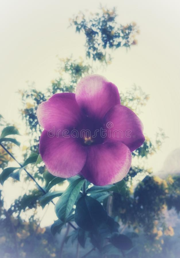 Eine schöne purpurrote Blume mit einer künstlerischen Note lizenzfreie stockfotografie