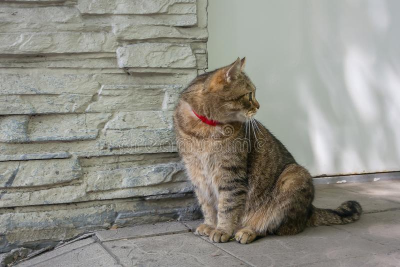 Eine schöne sibirische Katze, die nahe seinem Haus auf der Ferse sitzt lizenzfreies stockfoto
