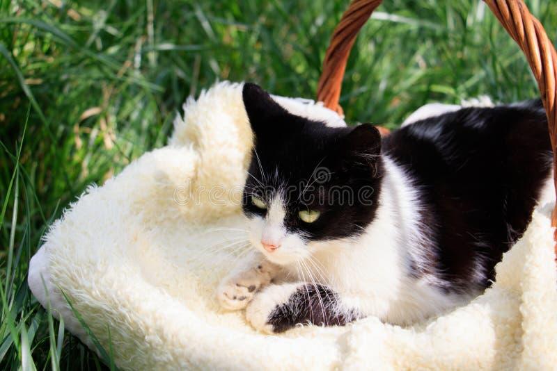 Eine schöne weiß-schwarze Katze, die in einem Korb liegt stockbild