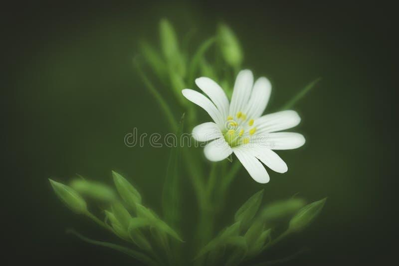 Eine schöne wilde Blume stockfotografie