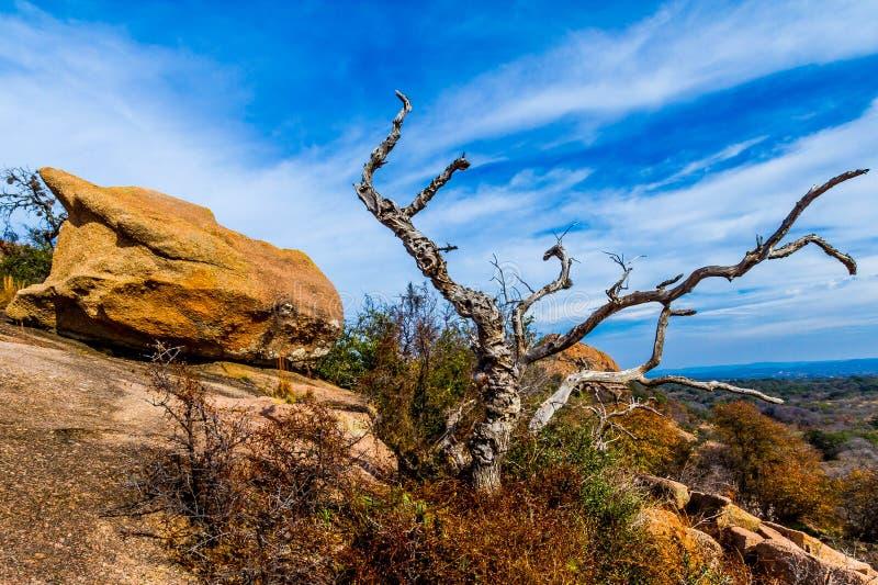 Eine schöne wilde Westansicht mit einem Gnarly toten Baum, eine Ansicht von die Türkei-Spitze auf verzaubertem Felsen, Texas. lizenzfreies stockfoto