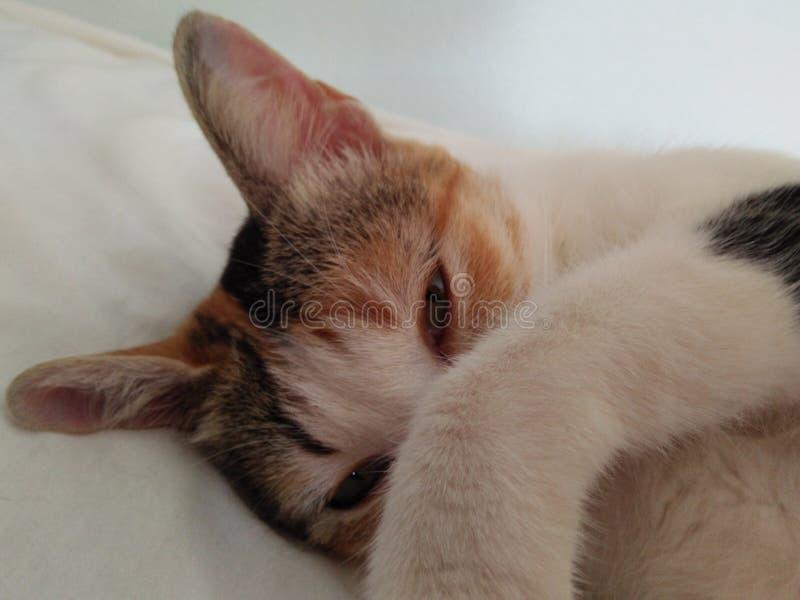 Eine schüchterne Katze lizenzfreies stockbild