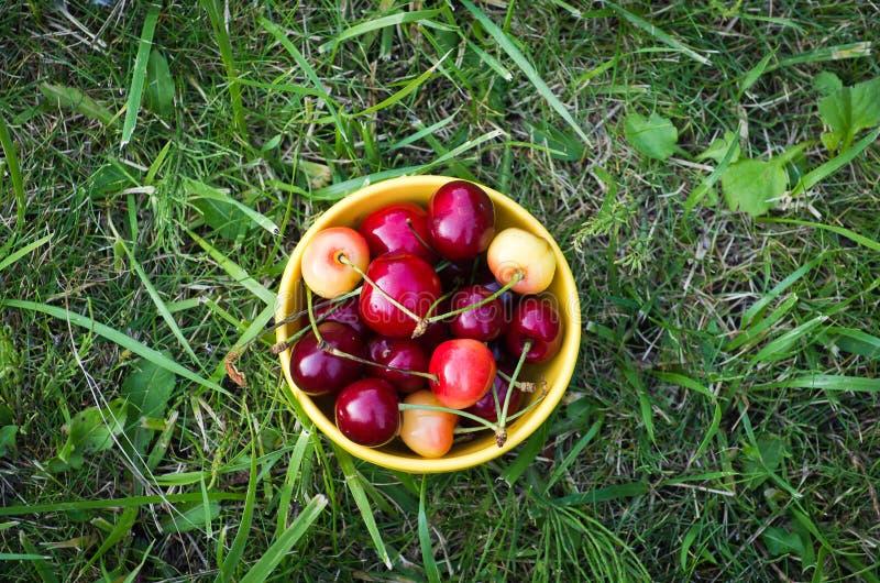 Eine Schüssel mit cerries stockfoto
