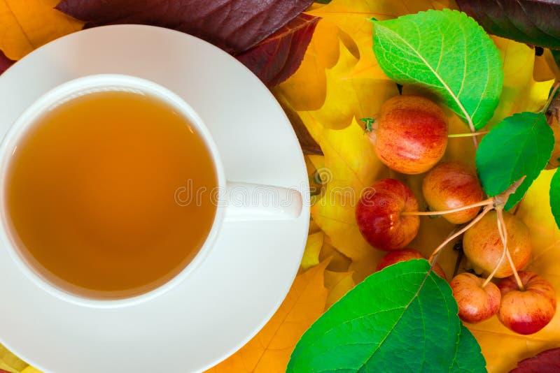 Eine Schale wunderbarer wohlriechender Tee auf einer silbernen Servierplatte vor dem hintergrund des Herbstlaubs und der kleinen  lizenzfreie stockfotografie