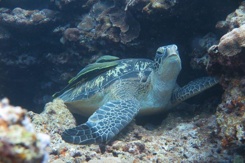 Eine Schildkröte lizenzfreie stockfotografie
