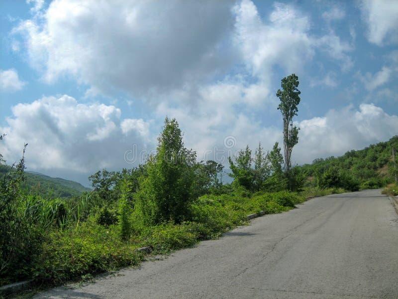 Eine schmale Asphaltstraße an einem heißen sonnigen Tag hinter immergrünen Bäumen und hellgrünem Gras stockfotos
