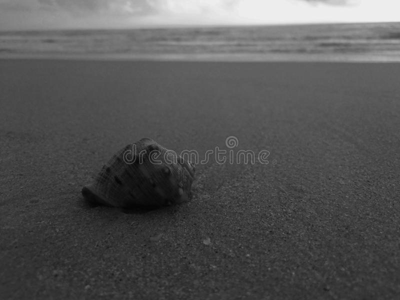 Eine Schnecke auf dem Strand lizenzfreies stockbild