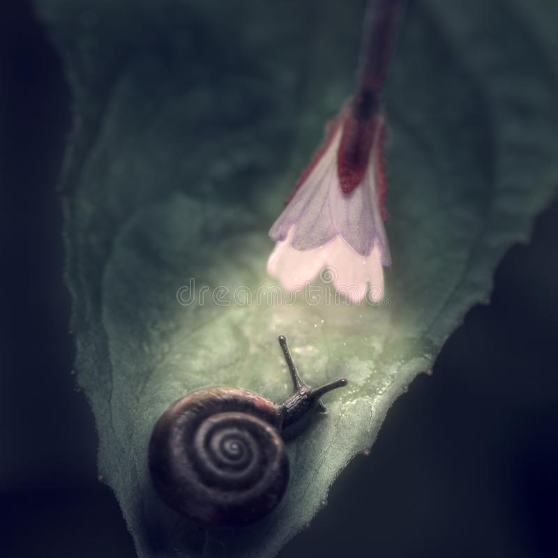 Eine Schnecke auf einem Blatt unter einer leuchtenden Blume auf einem dunklen Hintergrund lizenzfreie stockfotos