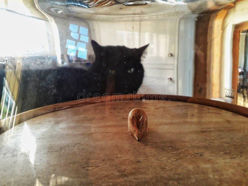 Eine schwarze Katze, die entlang einer hölzernen Maus unter einer Glaskuppel anstarrt stockbilder