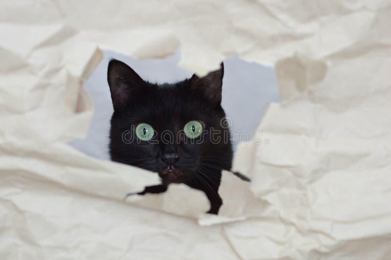 Eine schwarze Katze späht durch ein Loch lizenzfreies stockbild