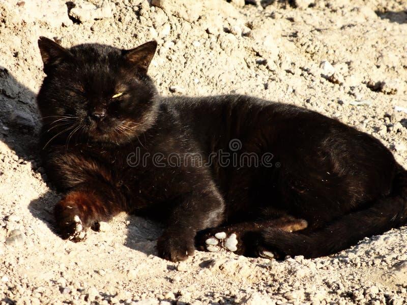 Eine schwarze schläfrige Katze des Auges stockfotografie