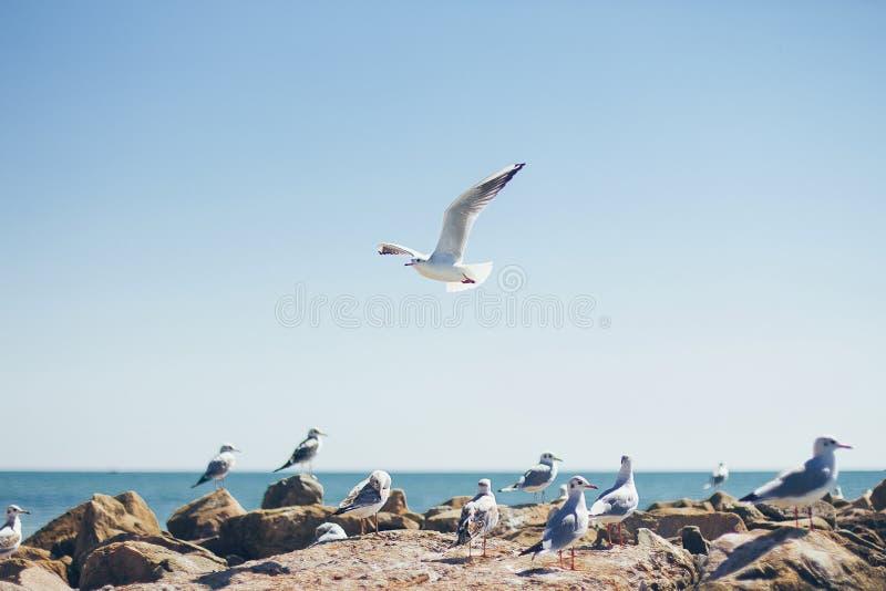 Eine Seemöwe in der Luft auf der Küste stockfotos