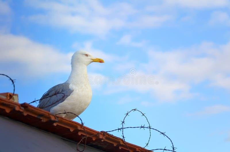 Eine Seemöwe sitzt auf dem Dach hinter Stacheldraht gegen einen blauen Himmel lizenzfreie stockbilder