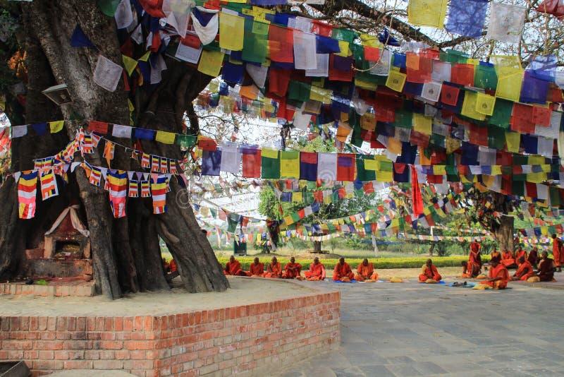 Eine Sitzung von Mönchen am heiligen Baum in Lumbini - der Geburtsort von Lord Buddha lizenzfreie stockbilder