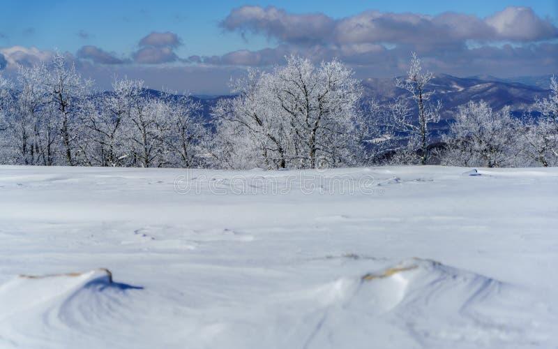 Eine Snowy-Wiese lizenzfreies stockbild