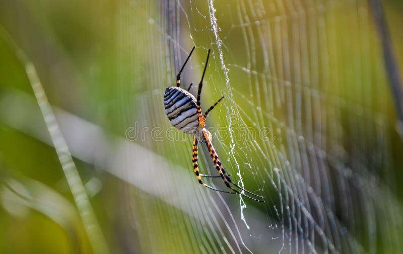 Eine Spinne stockbild