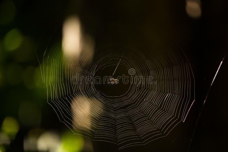 Eine Spinne in der Mitte des Netzes lizenzfreies stockfoto