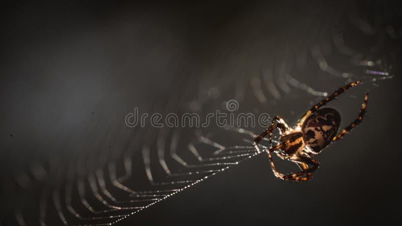 Eine Spinne, die sein Netz spinnt lizenzfreie stockbilder