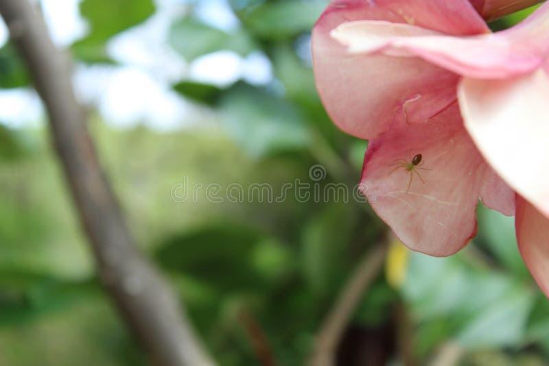Eine Spinne in einer Blume stockfotos