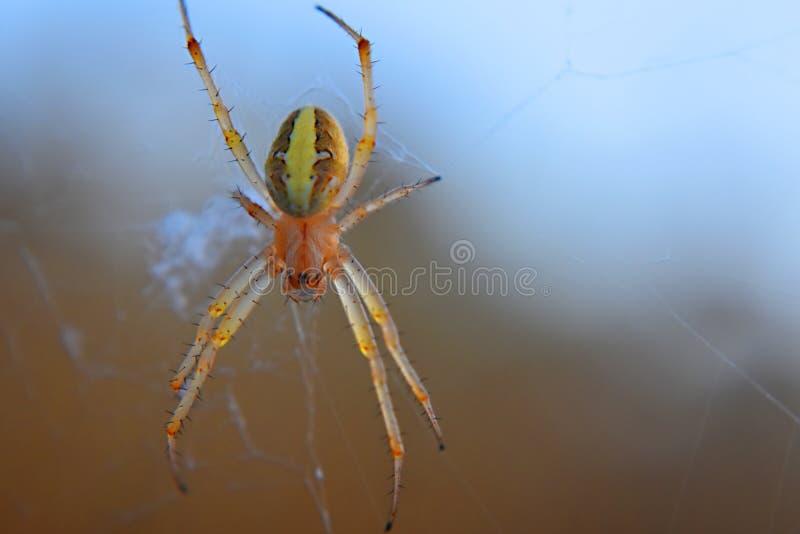 Eine Spinne im Netz stockfotografie