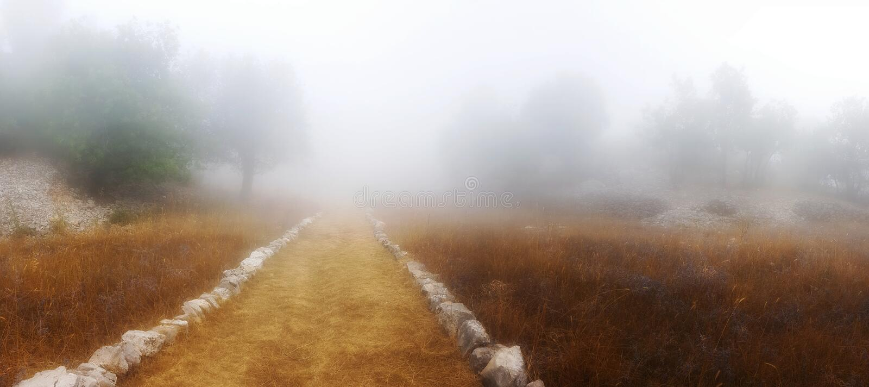 Eine Spur durch den Nebel lizenzfreies stockbild