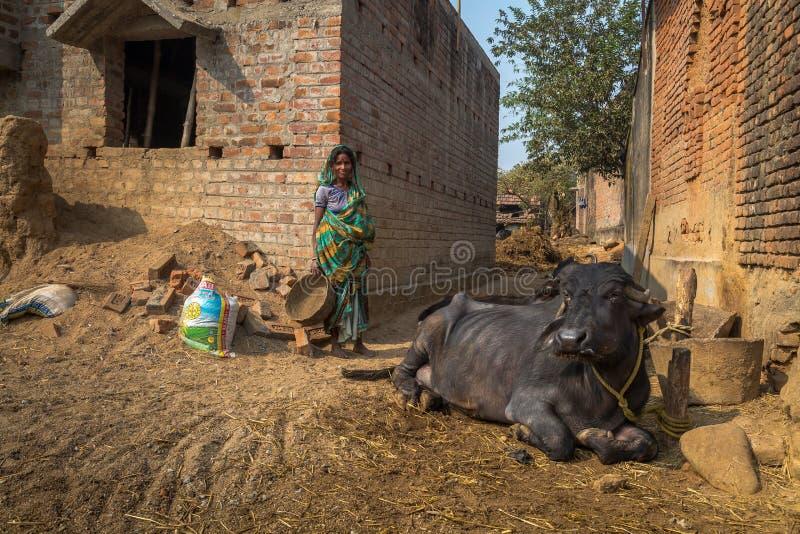 Eine Stammes- Frau steht neben einem gebundenen Büffel an ihrem Dorf in Bankura, Westbengalen lizenzfreie stockfotos