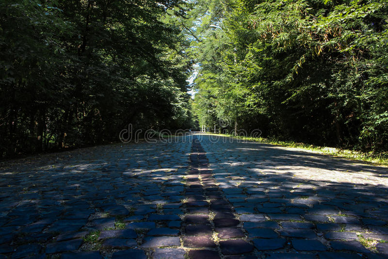 Eine Steinstraße im Wald stockbilder