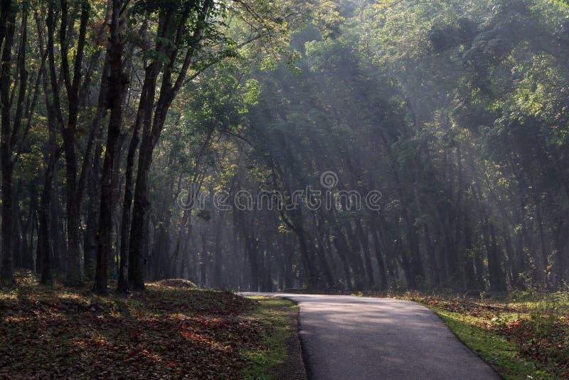 Eine Straße in der Gummiplantage lizenzfreie stockfotos