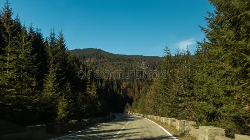 Eine Straße im Wald lizenzfreie stockfotos