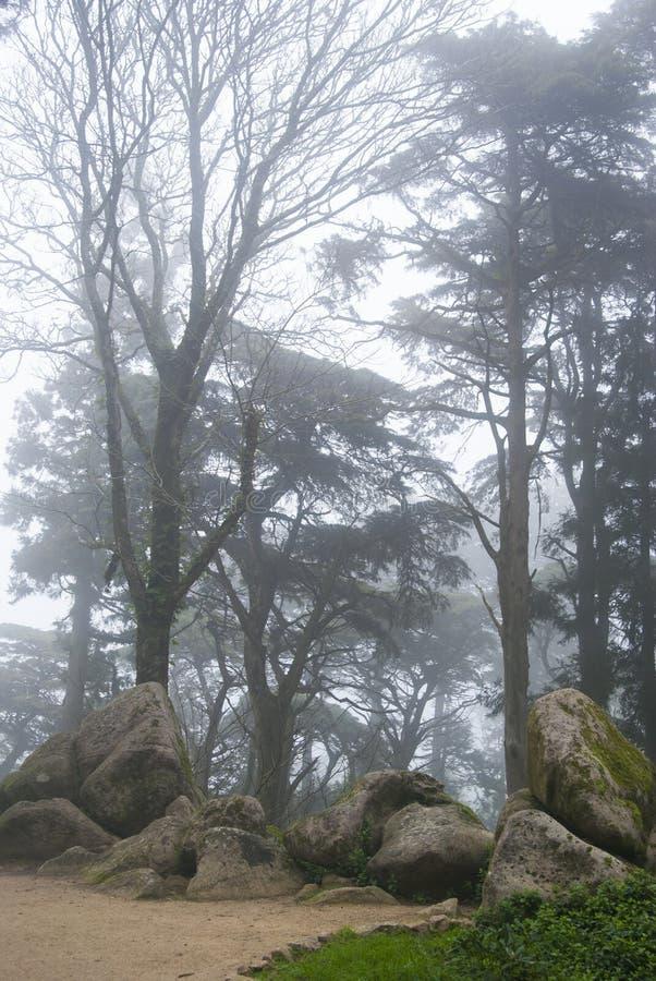 Eine Straße den in den nebeligen Bäumen des Waldes und Felsen im Nebel lizenzfreie stockfotos