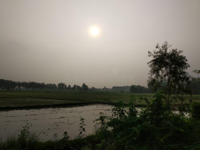 Eine Sun-Szene der Natur stockbilder