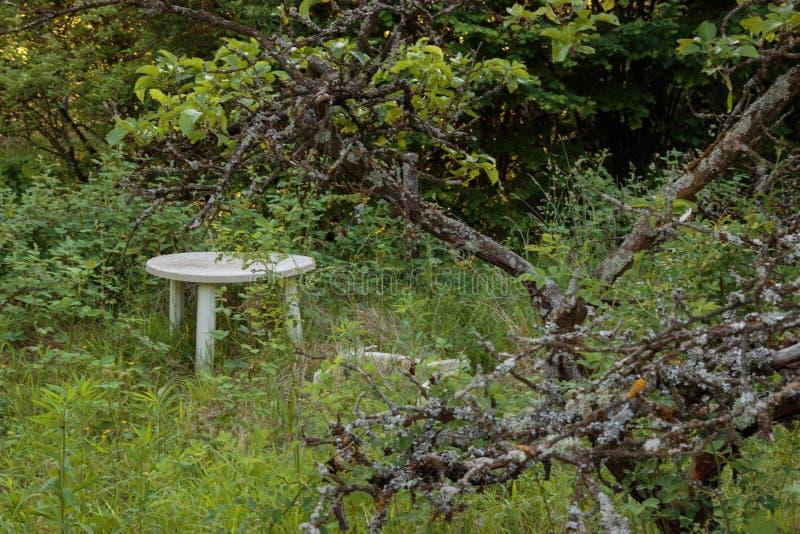 Eine Tabelle im Wald stockbilder