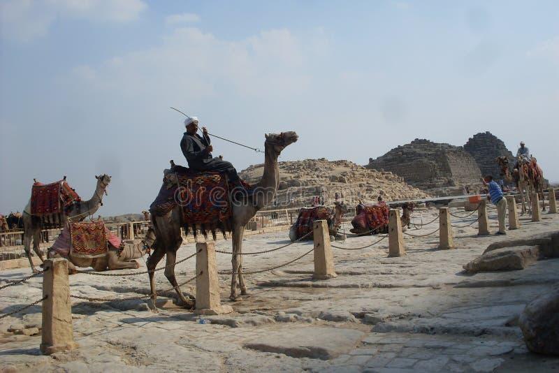Eine touristische Reise nach Ägypten zur Pyramide von Cheops auf Kamelen mit einer Gruppe Freunden stockfotografie