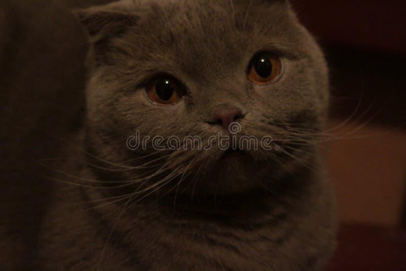 Eine traurige Katze wartet auf den Inhaber stockfotografie