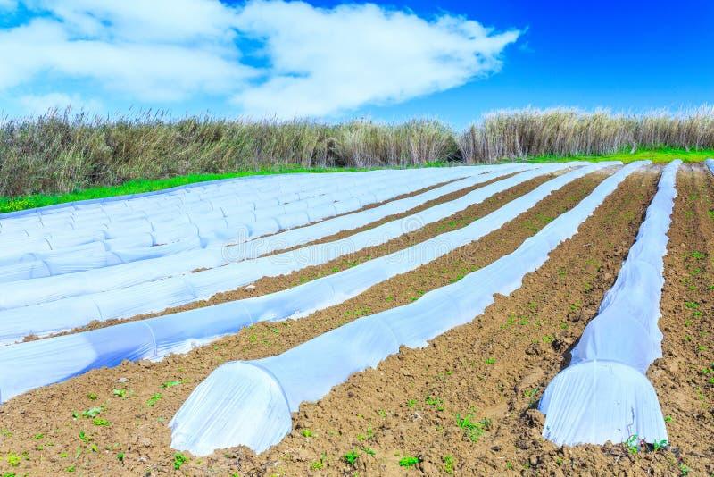 Eine typische Landwirtschaftstechnologie der Vorfrühlingsbearbeitung von lizenzfreies stockbild