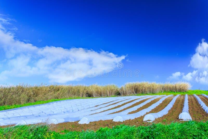 Eine typische Landwirtschaftstechnologie der Vorfrühlingsbearbeitung von stockfotografie