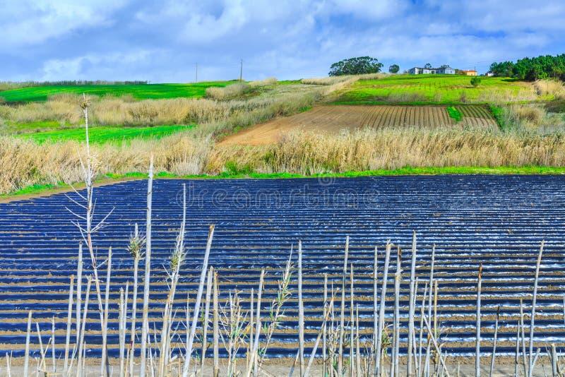 Eine typische Landwirtschaftstechnologie der Vorfrühlingsbearbeitung von lizenzfreie stockbilder