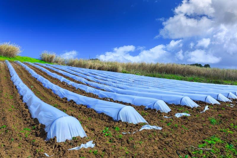 Eine typische Landwirtschaftstechnologie der Vorfrühlingsbearbeitung von lizenzfreie stockfotos