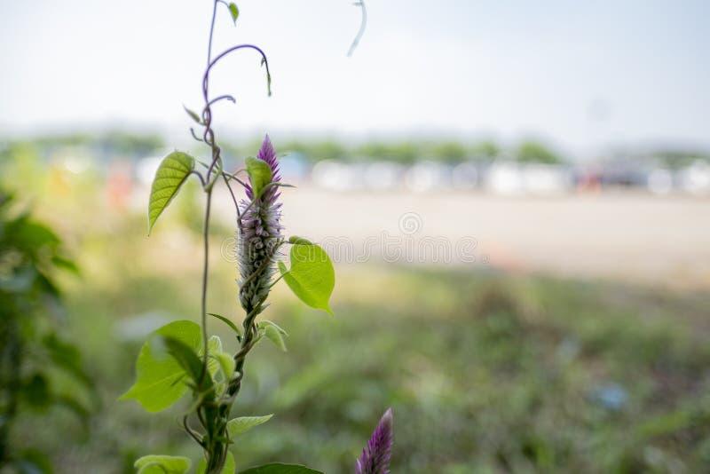 Eine unbekannte Blume gefunden auf den kleinen Gebieten lizenzfreie stockbilder