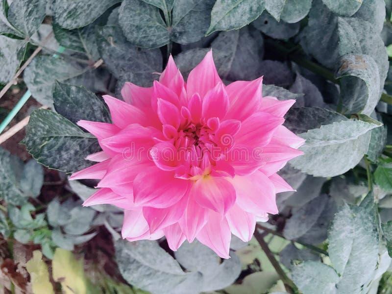 Eine unbekannte Blume lizenzfreie stockfotografie