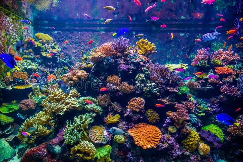 Eine Vielzahl von hellen Fischen bewegt sich gegen den Hintergrund von korallenroten Polypen und in der Unterwasserwelt eines gro lizenzfreies stockbild