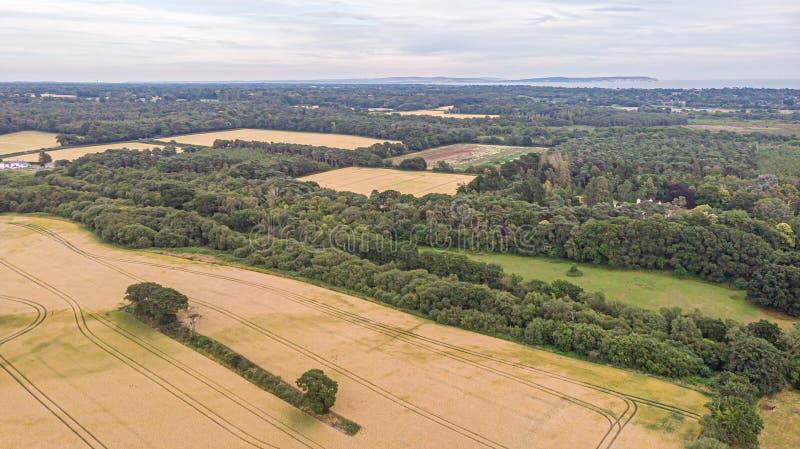 Eine Vogelperspektive eines gelben Erntefeldes mit Spuren des Traktors, der Bäume und des Waldes unter einem majestätischen stürm lizenzfreie stockfotografie
