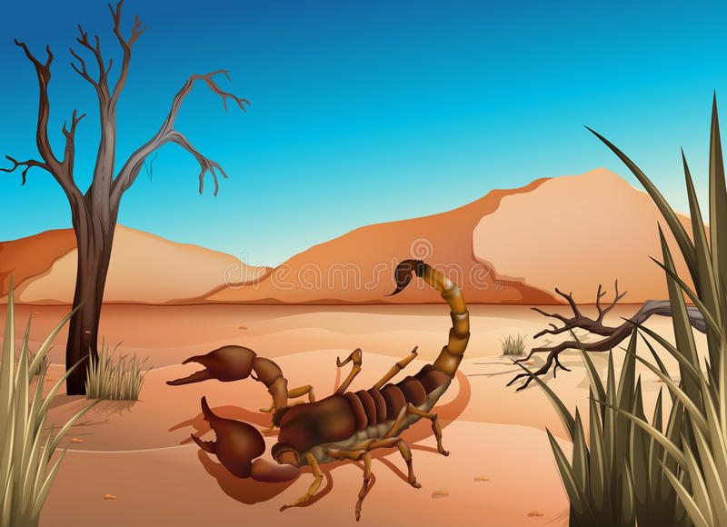 Eine Wüste mit einem Skorpion stock abbildung