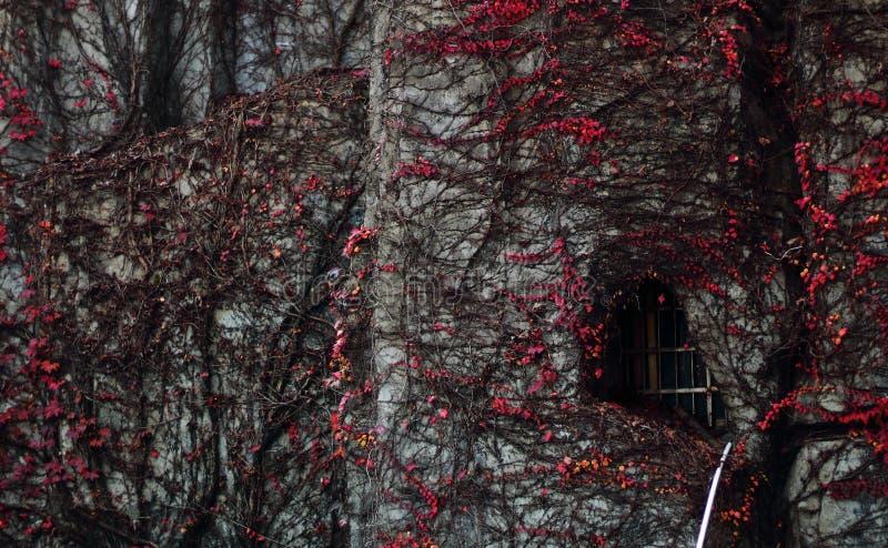 Eine Wand in Märchen stockbild