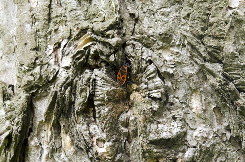 Eine Wanze auf einem Baum lizenzfreie stockfotografie