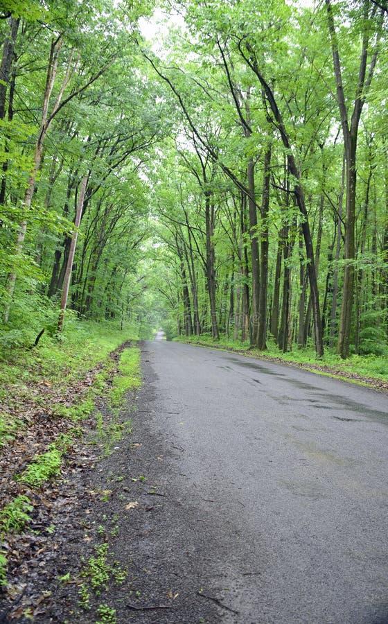 Eine Wegstraße gestaltet durch Bäume im Wald stockfotos
