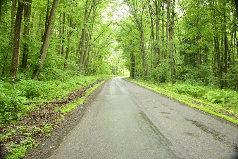 Eine Wegstraße gestaltet durch Bäume im Wald stockfotografie